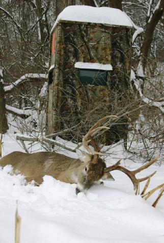 hunting from a whitetails bowhunting blinds blog up the basics ground setting your before blind